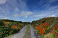 Colorful rural road ireland a narrow country gravel in county clare the is bordered by hedgerows with a mixture of orange purple Stock Image
