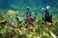 Colorful sea floor and fish sponges tropical in shallow seabed of turtle grass Royalty Free Stock Image