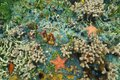 Colorful seabed with starfishes in caribbean sea the corals sponges and anemones Stock Image