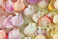 Colorful seashells on sand Stock Images