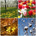Colorful seasons Stock Images