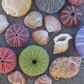 Colorful seaurchins and shells on wet sand beach variety of Royalty Free Stock Photo