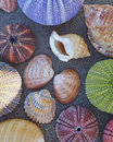 Colorful seaurchins and shells on wet sand beach variety of Royalty Free Stock Image