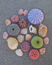 Colorful seaurchins and shells on wet sand beach variety of Stock Photography