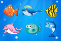 Colorful and smiling fishes under the sea illustration of Stock Photos