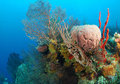 Colorful sponges on coral reef Stock Photos
