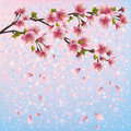 Colorful spring background with sakura blossom - J Royalty Free Stock Photo