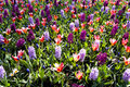 Colorful Spring Flower Mix