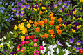 Colorful spring flowers in flowerbed