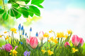 Colorful spring flowers with green grass outdoors Stock Photos