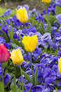Colorful Spring tulip background Stock Photo