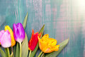 Colorful spring tulip flowers on green wooden background as greeting card with free space