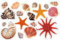 Colorful starfish and seashells