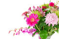Colorful summer flowers mix isolated on the white. Stock Photos