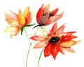 Colorful summer flowers watercolor illustration Stock Photos