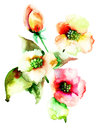 Colorful summer flowers watercolor painting Royalty Free Stock Image
