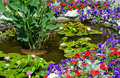 Colorful summer garden pond with lily and petunia flowers Royalty Free Stock Image