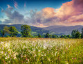 Colorful summer sunrise in the mountains with feather grass Royalty Free Stock Photo
