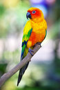 Colorful sun bird sitting on a branch Royalty Free Stock Photo