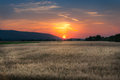 Colorful sunset over field wheat Royalty Free Stock Photo