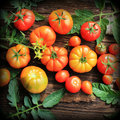Colorful tomatoes - red,yellow , orange. Harvest vegetable cooking conception. Royalty Free Stock Photo