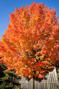 Colorful tree in the autumn Royalty Free Stock Photography