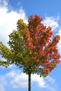 Colorful Tree Leaves in the Fall Season Stock Photo