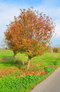 Colorful tree near path Royalty Free Stock Photo