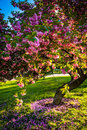 Colorful trees in druid hill park baltimore maryland Royalty Free Stock Photo