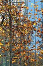 Colorful Trees Modern Building in fall
