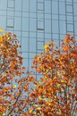 Colorful Trees Modern Building in fall Royalty Free Stock Photo