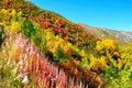 Colorful Trees, Svaneti Georgia
