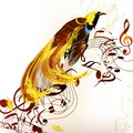 Colorful tropical bird with staves and notes Royalty Free Stock Image