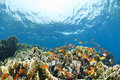 Colorful tropical coral scene in shallow water. Royalty Free Stock Photos