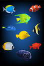 Colorful tropical fish Royalty Free Stock Images