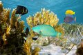 Colorful tropical fish in coral reef undersea scene with a atlantic ocean bahamas islands Stock Photography