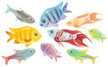 Colorful tropical fish vector illustration Royalty Free Stock Image