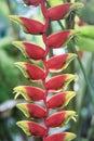 Colorful Tropical Flowers. Hel...