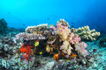 Colorful tropical reef with corals Royalty Free Stock Image