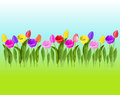 Colorful tulips on a background of sky and grass.