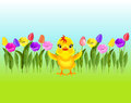 Colorful tulips and chicken on background of sky and grass.