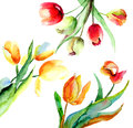 Colorful tulips flowers watercolor illustration Stock Image