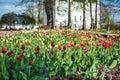 Colorful tulips garden near Saint Nicholas (Nikolsky) monastery Royalty Free Stock Photo
