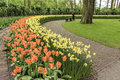Colorful Tulips Garden Royalty Free Stock Photo