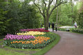 Colorful tulips in keukenhof gardens Royalty Free Stock Photo