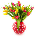 Colorful tulips in red vase Royalty Free Stock Photo