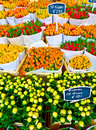 Colorful tulips sale amsterdam flower market Royalty Free Stock Image
