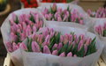 Colorful tulips on sale in Amsterdam flower market, Netherlands. Royalty Free Stock Photo