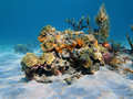 Colorful under water marine life on a sandy seabed caribbean sea panama Stock Photos