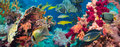 Colorful underwater reef with coral and sponges offshore rocky small tropical fish swimming by in a blue ocean Royalty Free Stock Photo